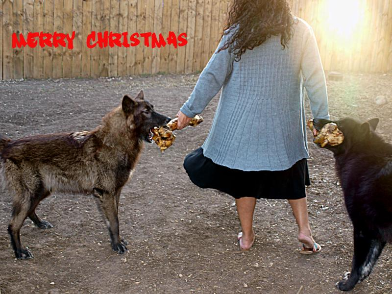 Merry christmas from my pack to yours!-merry-christmas.jpg
