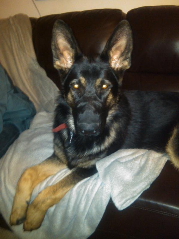 Back Injury  Knuckling Paw  Limping Dog