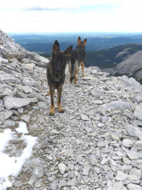 Does your dog trust you? REALLY trust you?-moose-mountain-033small.jpg