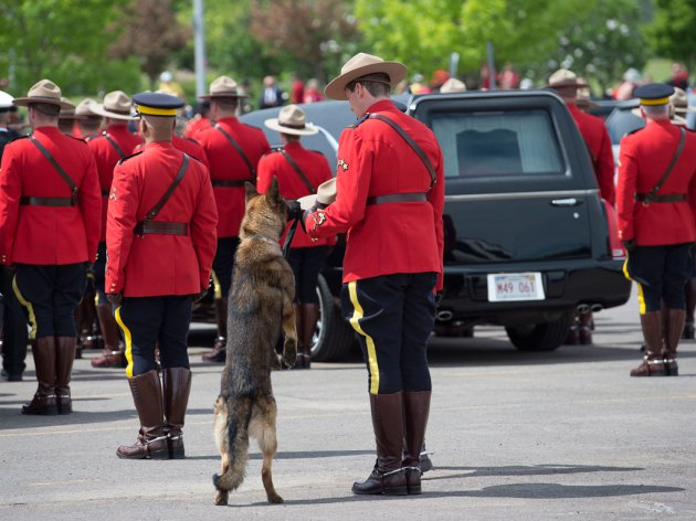 Danny will continue to work as RCMP police dog Images of dog sniffing late master�s S-nb_moncton_manhunt_20140610.jpg