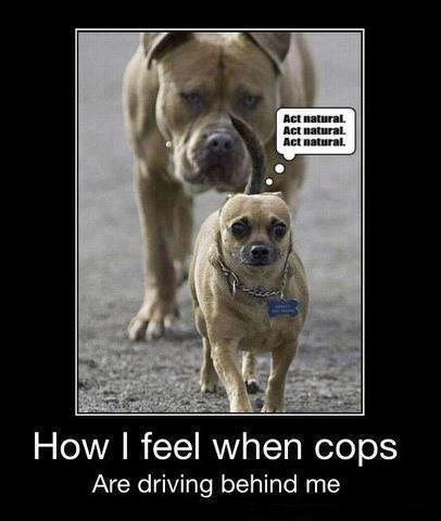 Not guilty!...lol-not-guilty.jpg