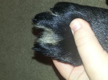 Bicolor or Black with Bleedthrough? HELP-paw.jpg