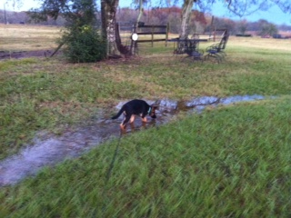 Puppies and puddles, oh the humanity :D-photo-1.jpg
