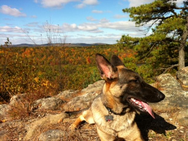Show me your dog(s) in autumn!-photo-2-.jpg