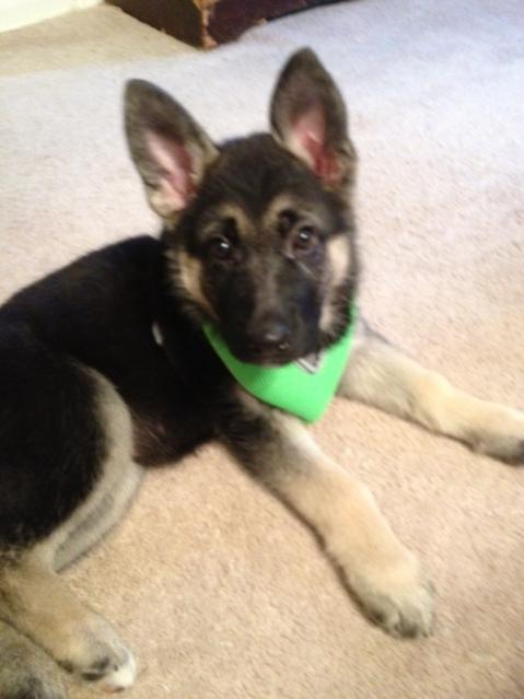 Jazzy's new harness-photo-2-.jpg