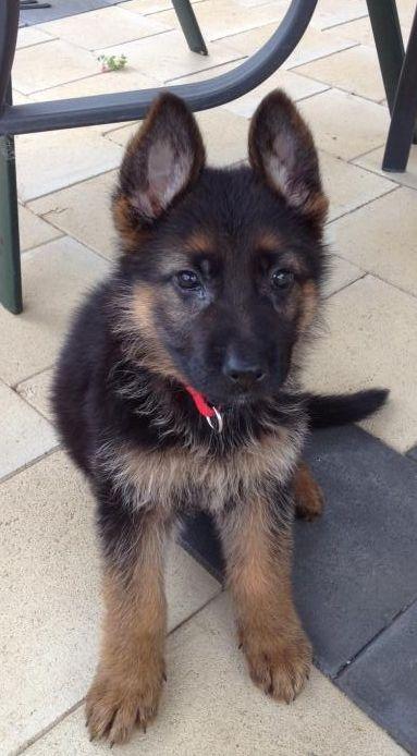 Under developing puppy??-photo-2.jpg