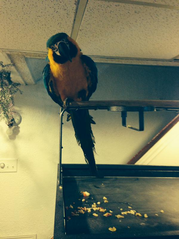 My new Macaw-photo-3.jpg