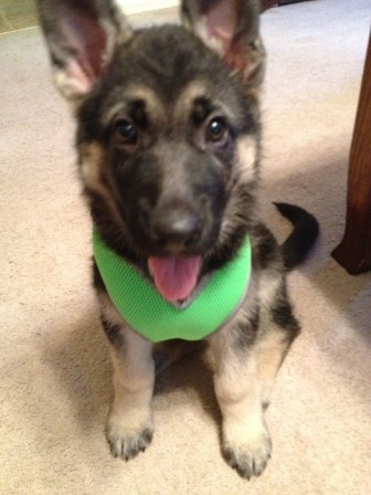 Jazzy's new harness-photo-3-.jpg
