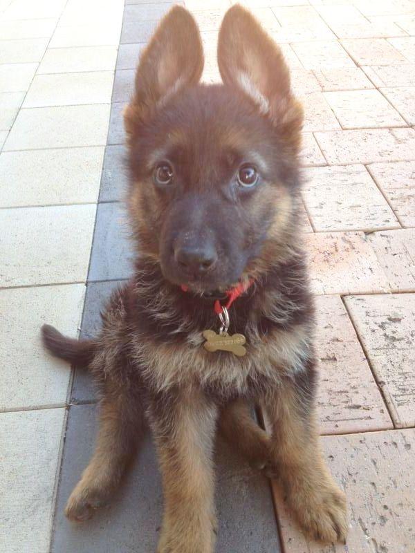 Under developing puppy??-photo-3.jpg