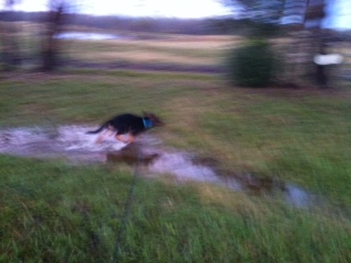 Puppies and puddles, oh the humanity :D-photo-3.jpg