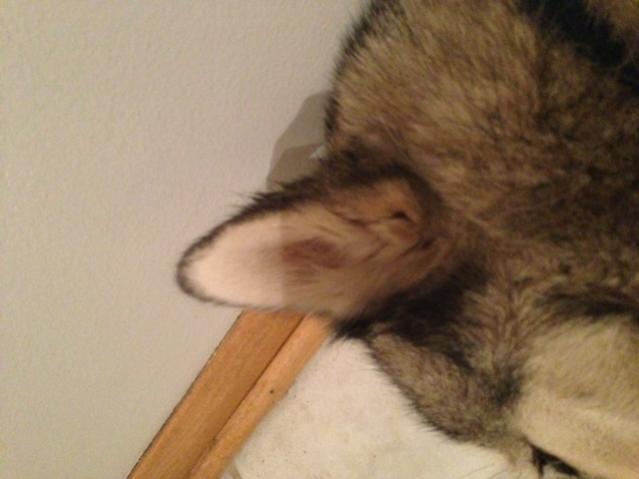 Show Me Those EAR FLOOFIES!-photo-8.jpg