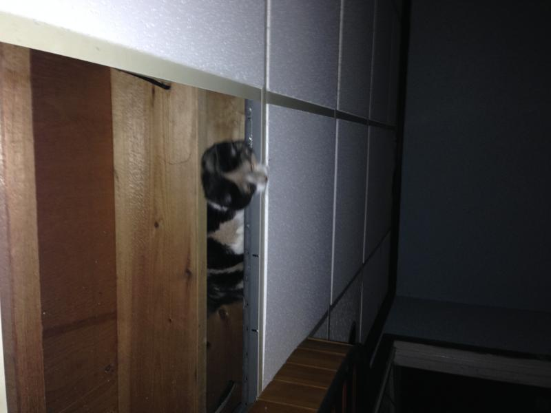 DO any of your cats do this-photo-9.jpg