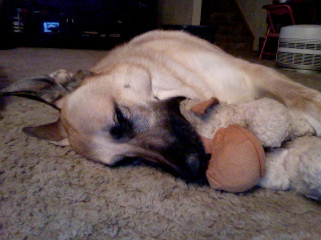 Let's See Your Dog with His/Her Favorite Toy.-photo-2012-03-30-20.16-2.jpg