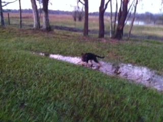Puppies and puddles, oh the humanity :D-photo2.jpg