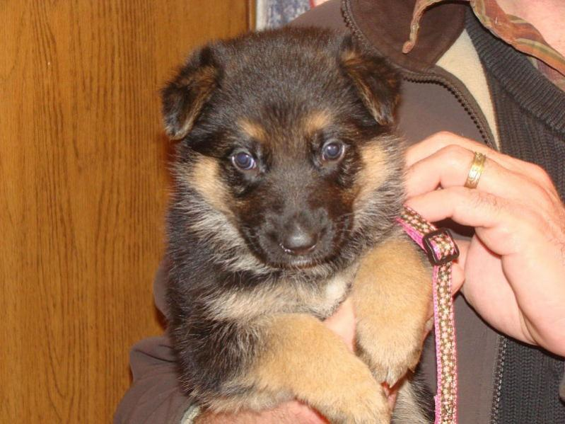 Whidh One?-pink_and_brown_female_4wks_opt.jpg