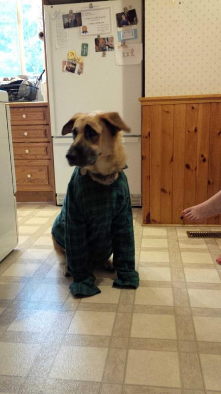 creative kids & dogs-plaidshihs.jpg