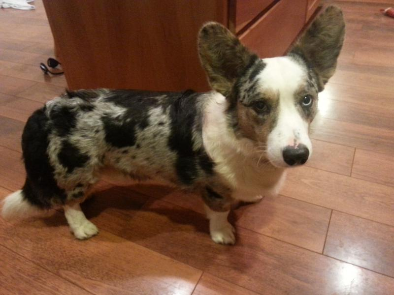 Adding a Corgi?-radar-kitchen.jpg
