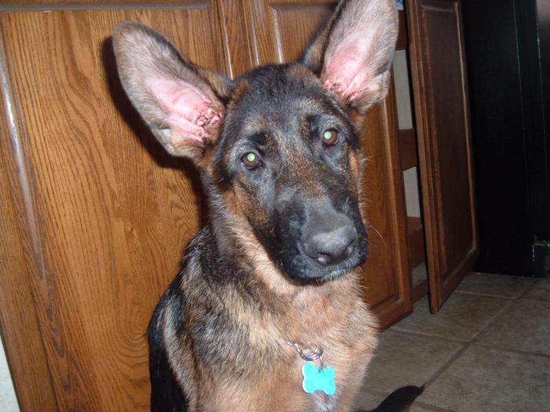 Ears!-reb4.jpg