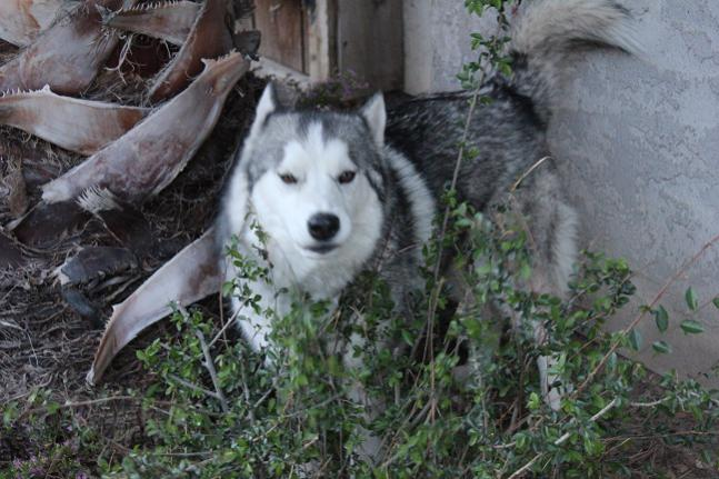 I took some pictures!-resized-smokey.jpg