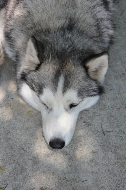 I took some pictures!-resized-smokey2.jpg