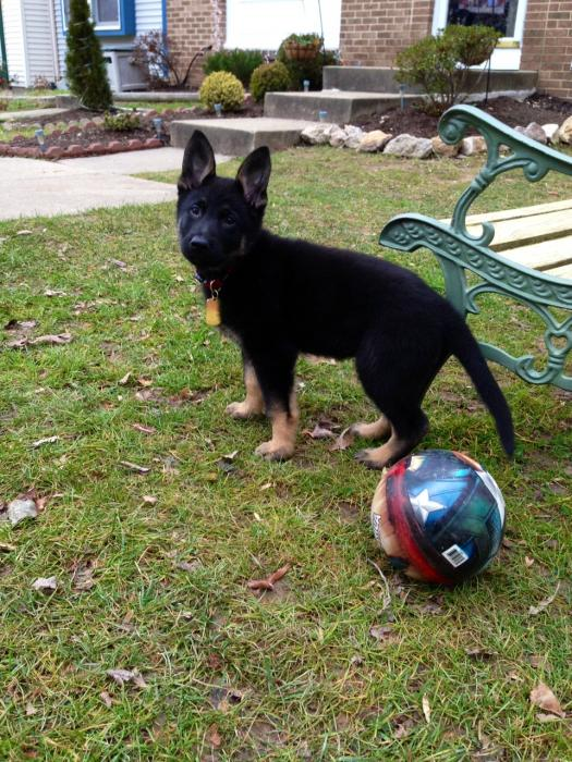 Just some Pics of Rico!-rico-playing-ball-1jan2013.jpg