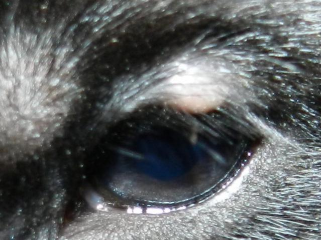 bump on puppys eye-rscn5489.jpg