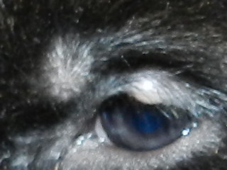 bump on puppys eye-rscn5491.jpg