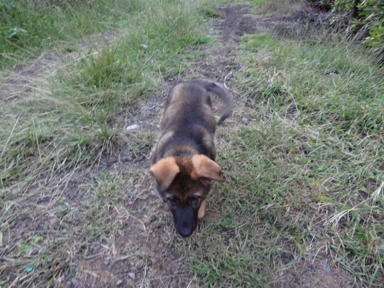 My new Czech pup.-rsz_dsc00009.jpg