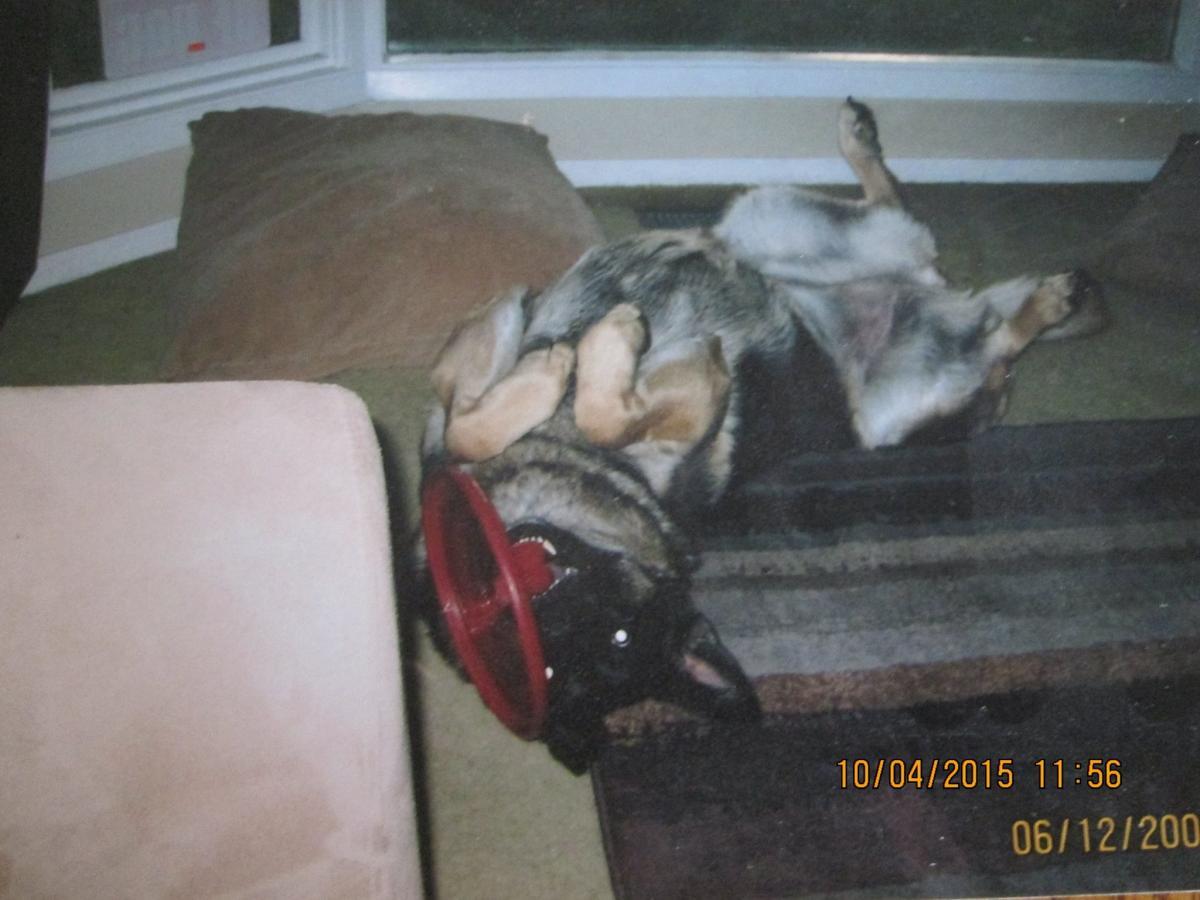 Funny ways to fall asleep!-sabi-frisbee.jpg
