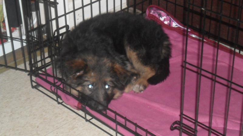 Samson (Sammy) and Delilah (Lilah) - 9 weeks-sam_0089.jpg