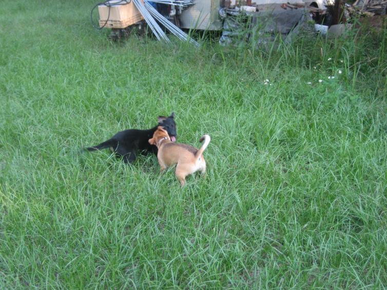 chakis & bisel-sd-003.jpg