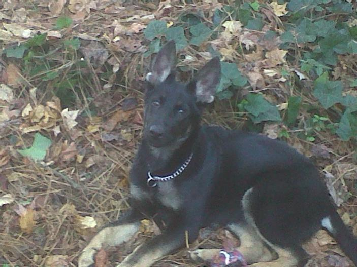 Good evening from Fayetteville GA-securedownload.jpg