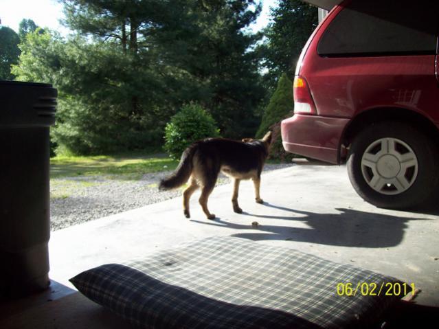 Is Large Breed Dog food necessary?-shadow-014-640x480-.jpg