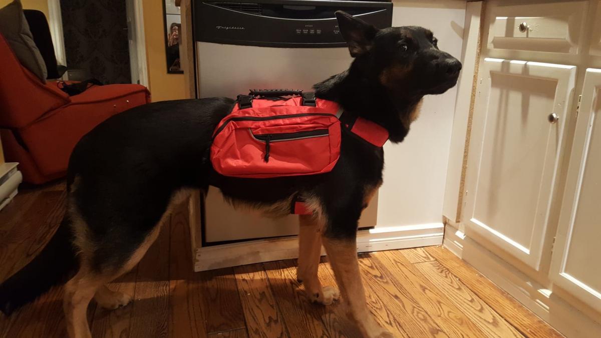 Fitting Dog Backpack-sitka-backpack.jpg