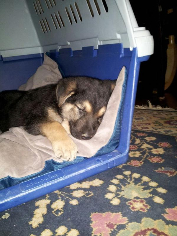 fast potty training?-sleepyhuter.jpg