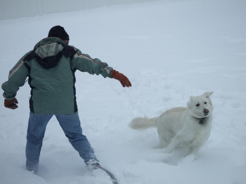 SHOW ME your dog in the air-snowstorm-2010-014.jpg