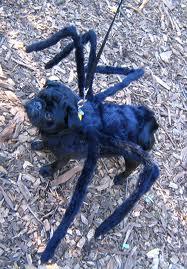 Halloween-spiderdog.jpg