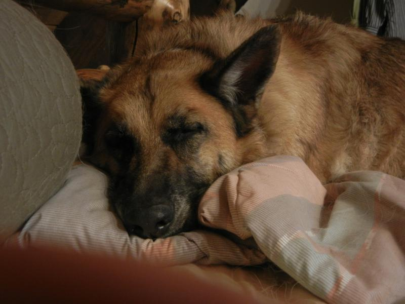 Lost my girl Julietta, love you girl.-summer-11-190.jpg