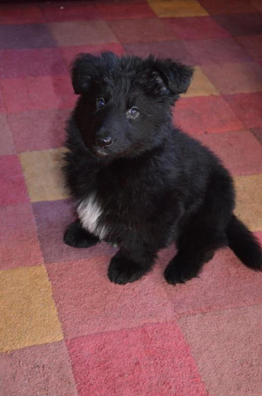 Worried about weight unneccesarily?-teddy-8-weeks.jpg