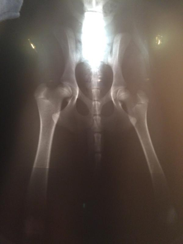 Six month old male puppy x-rays-thumb_img_1742_1024.jpg