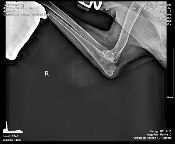 Tia's Hip and Elbow Xrays (Opinions Please)-tias_elbow_1_opt.jpg