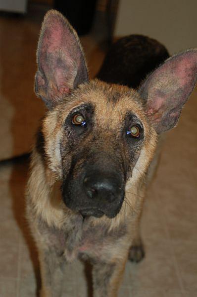 The Dog 2010