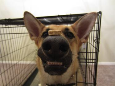 Show Me Your Dog's Smile...-untitled1.jpg