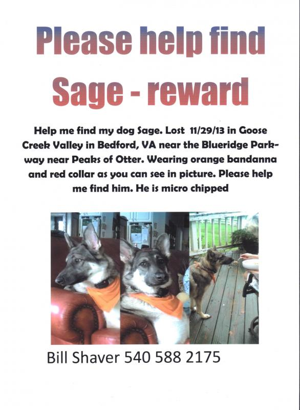 Lost Male GSD, Bedford, VA-untitled19.jpg