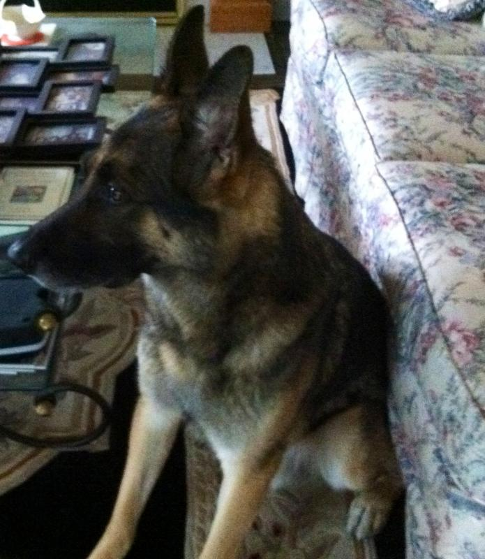 Happy 7th Birthday Joey!-waiting-his-master-come-home.jpg