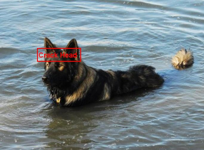 Does your GSD like water?-water-crack-head.jpg