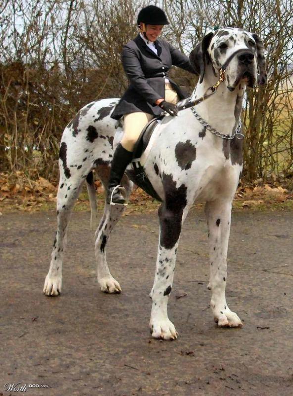 фото dog riding a