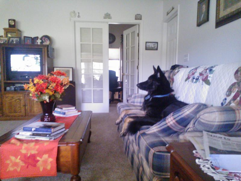 My GSD is showing increased aloofness with my parents.  Is this normal?-wp_000588.jpg