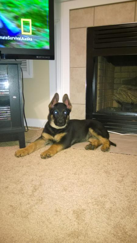 10.5 weeks old Magnuss-wp_20140224_003.jpg