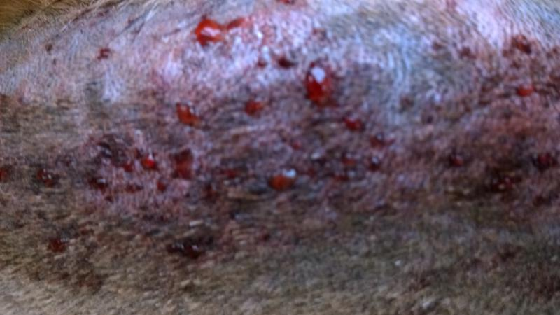 Horrible Rash - Vet Clueless...help?-wp_20140513_15_50_25_pro.jpg